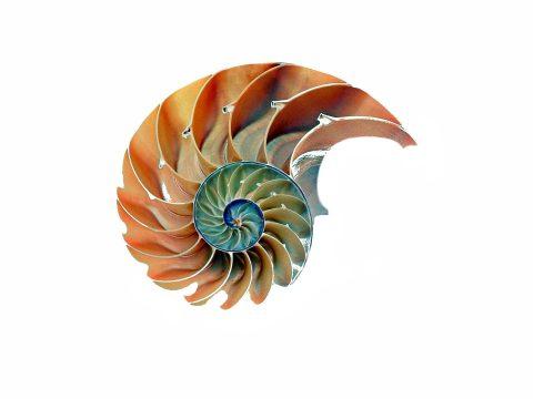 shell-1847458_1920