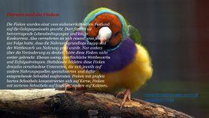 Darwin und die Finken Bild