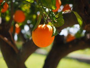 orange-1117645_1920