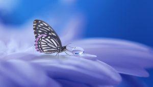 butterfly-3054736_1920